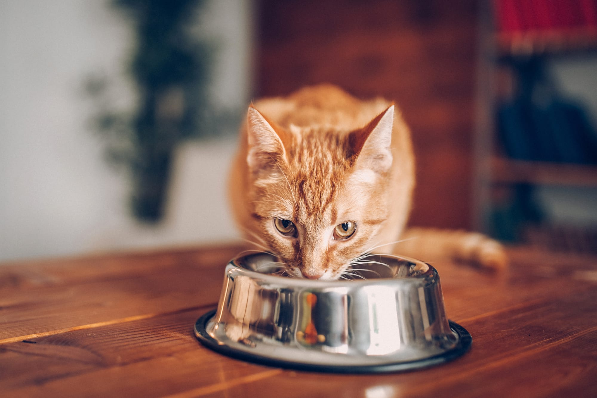 House Cures For Cats With Constipation - Cat